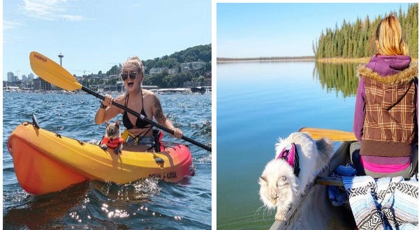 cats on kayak