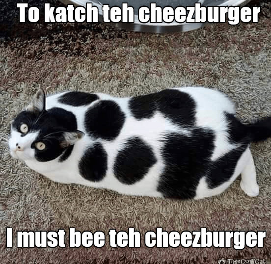 Cheezburger Image 8974479872