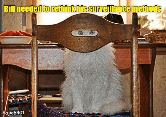 cat surveillance rethink caption methods - 8974554112