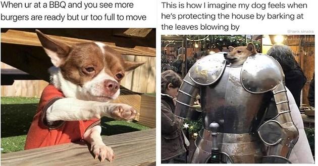 dogs doggo memes funny