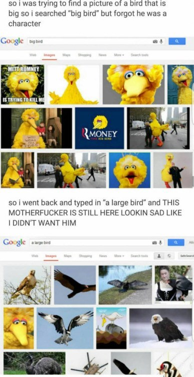 image big bird google search He's a Large Bird With a Big Heart... And You Broke It