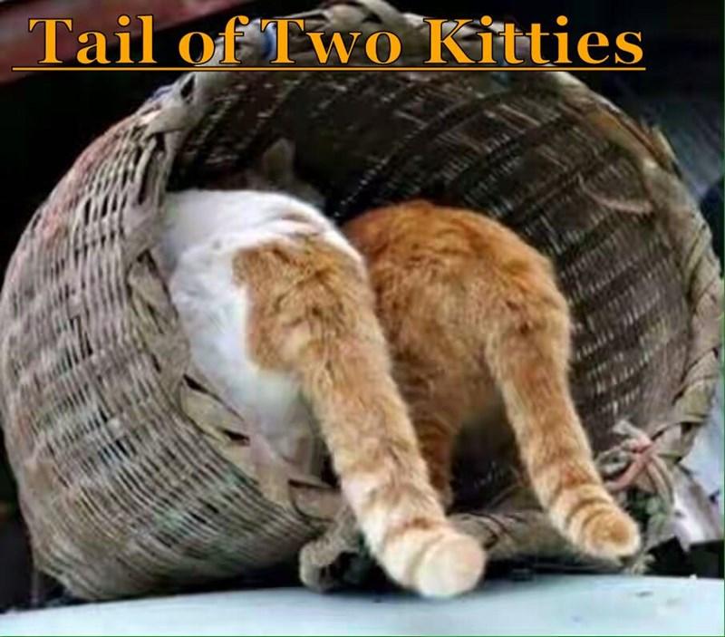 Tail of Two Kitties