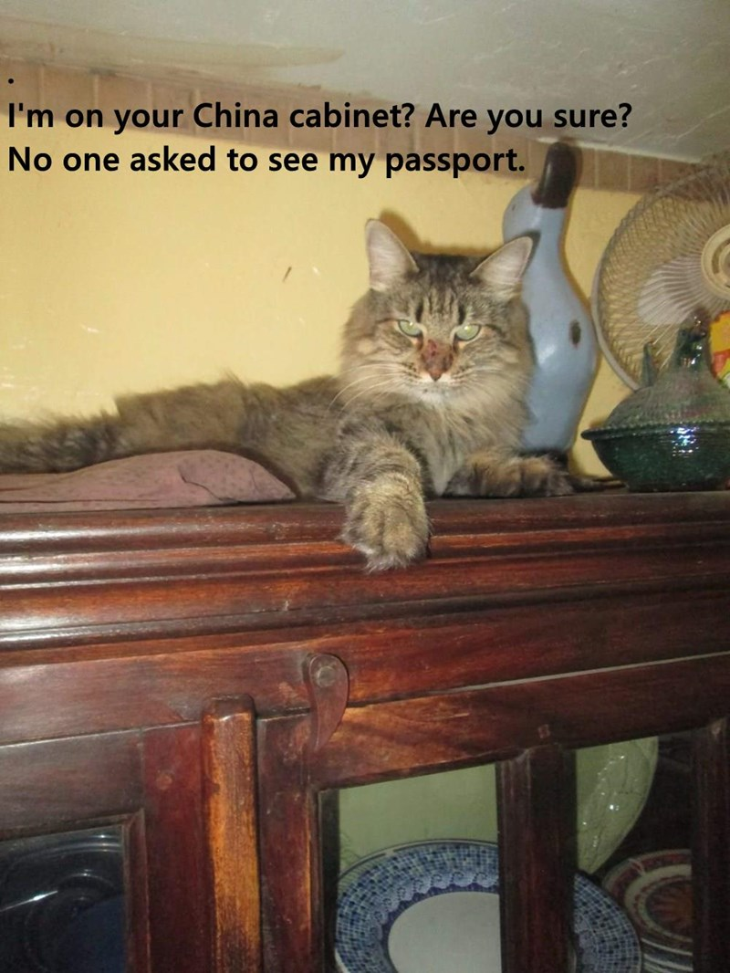 .                                                                                     I'm on your China cabinet? Are you sure?                                                             No one asked to see my passport.