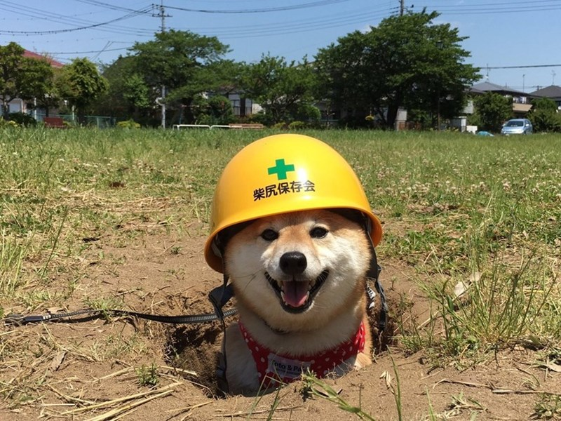 such rescue much hat wow