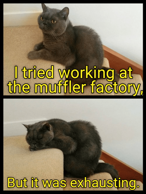 cat caption exhausting muffler factory working - 8974993664