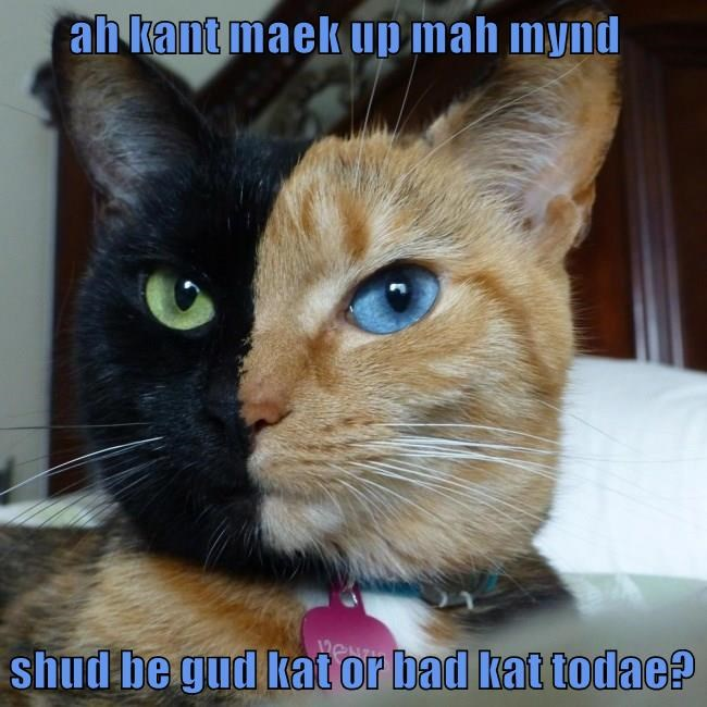 ah kant maek up mah mynd  shud be gud kat or bad kat todae?