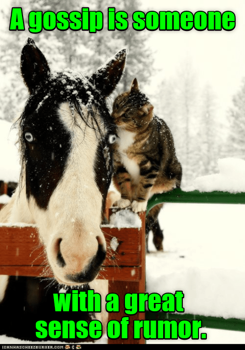 cat rumor sense great someone caption gossip - 8975165696