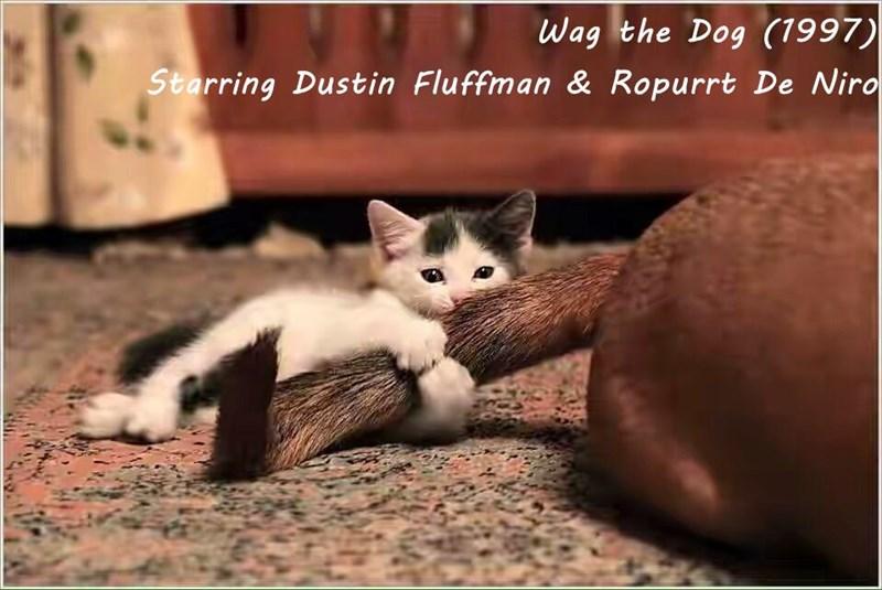 Wag the Dog (1997)                                                            Starring Dustin Fluffman & Ropurrt De Niro