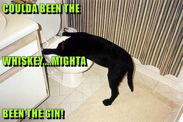 COULDA BEEN THE  WHISKEY....MIGHTA BEEN THE GIN!