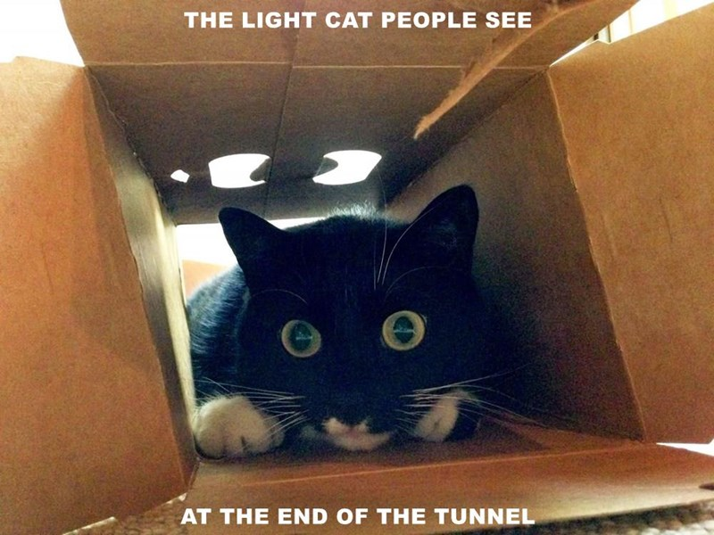 THE LIGHT CAT PEOPLE SEE  AT THE END OF THE TUNNEL