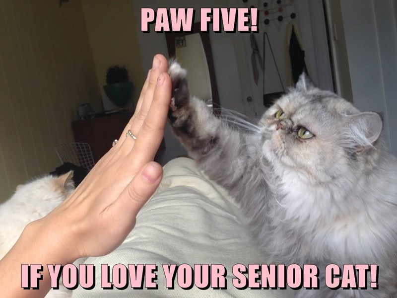 PAW FIVE!