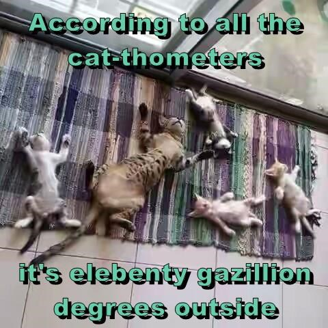 According to all the              cat-thometers  it's elebenty gazillion degrees outside