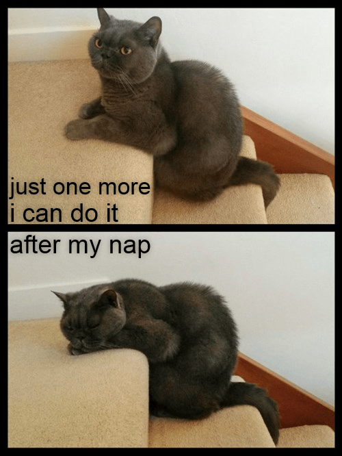 cat after nap do it caption one more - 8975430912