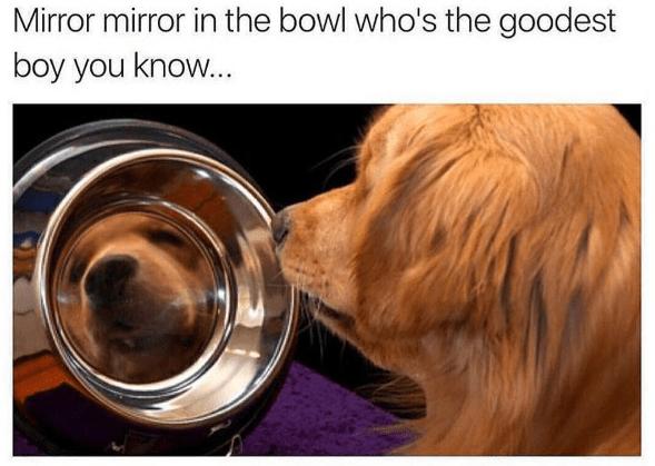 magic mirror doggo edition