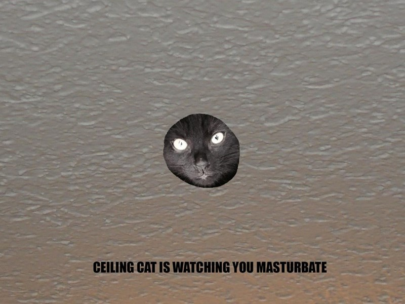 Water - CEILING CAT IS WATCHING YOU MASTURBATE