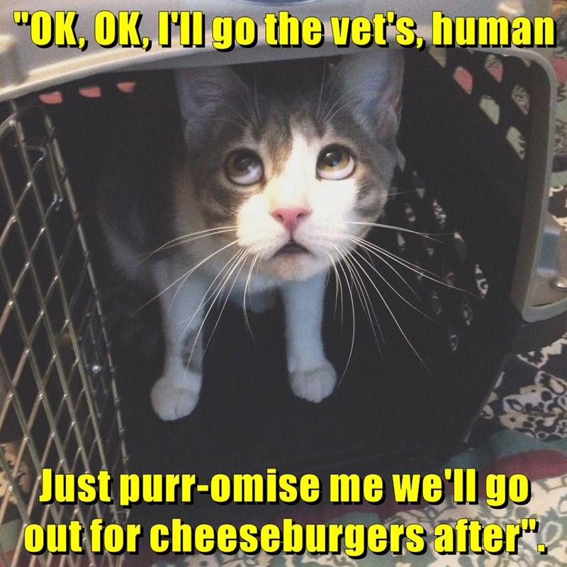 Cheezburger Image 8975512832