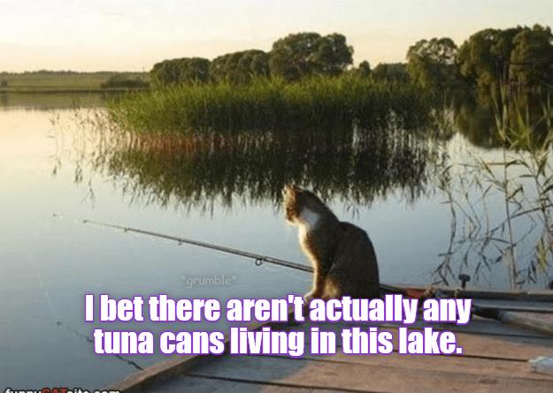 Caught anything yet?