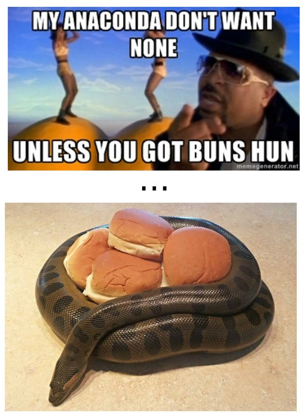image anaconda buns Oh... You Brought Them...