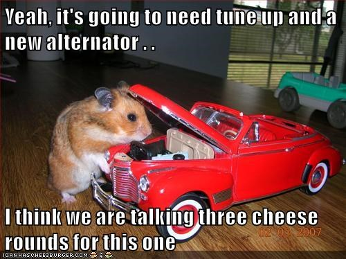 car,hamster,mechanic,caption