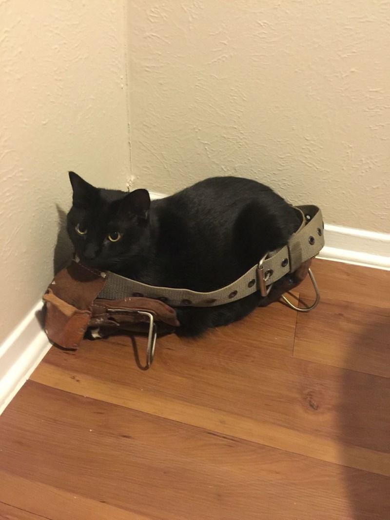 Construction Kitten Likes His New Tool Belt