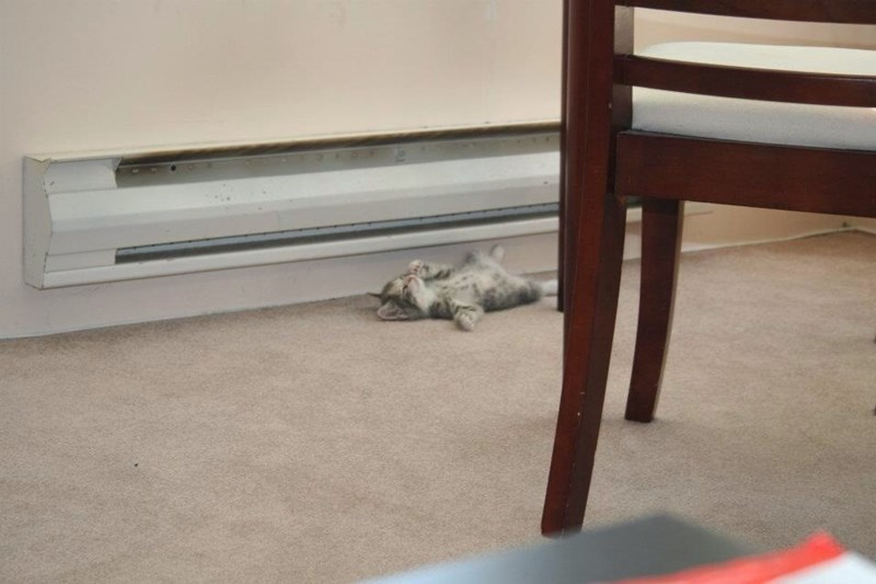 Funny cat meme of a kitten passed out in front of the heater