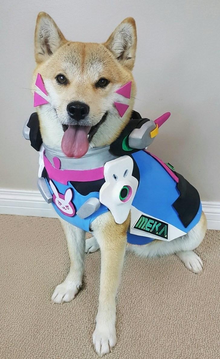 Dog - PP MEKA