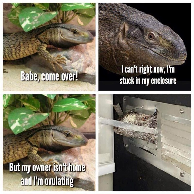 Memes come over lizard - 8976020224