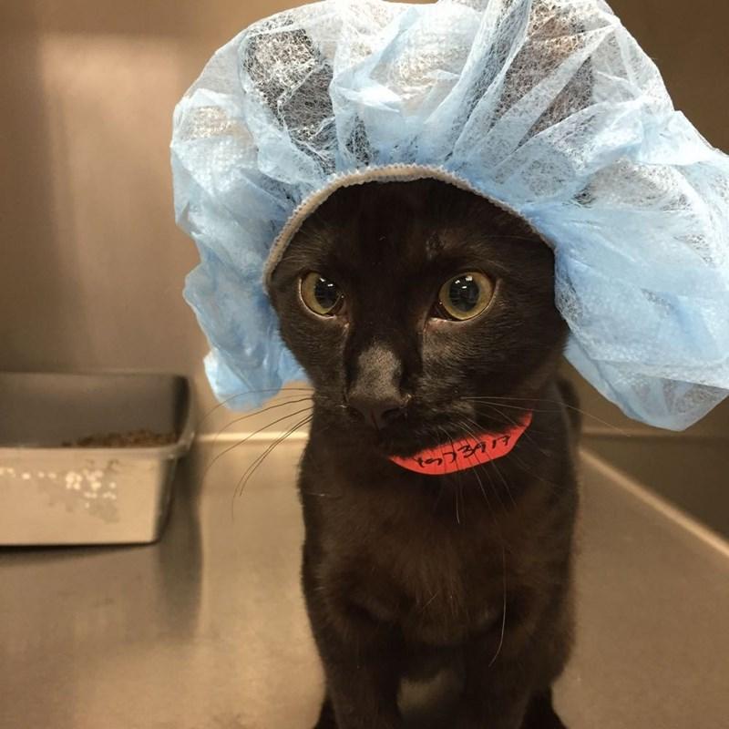 veterinarian,Cats