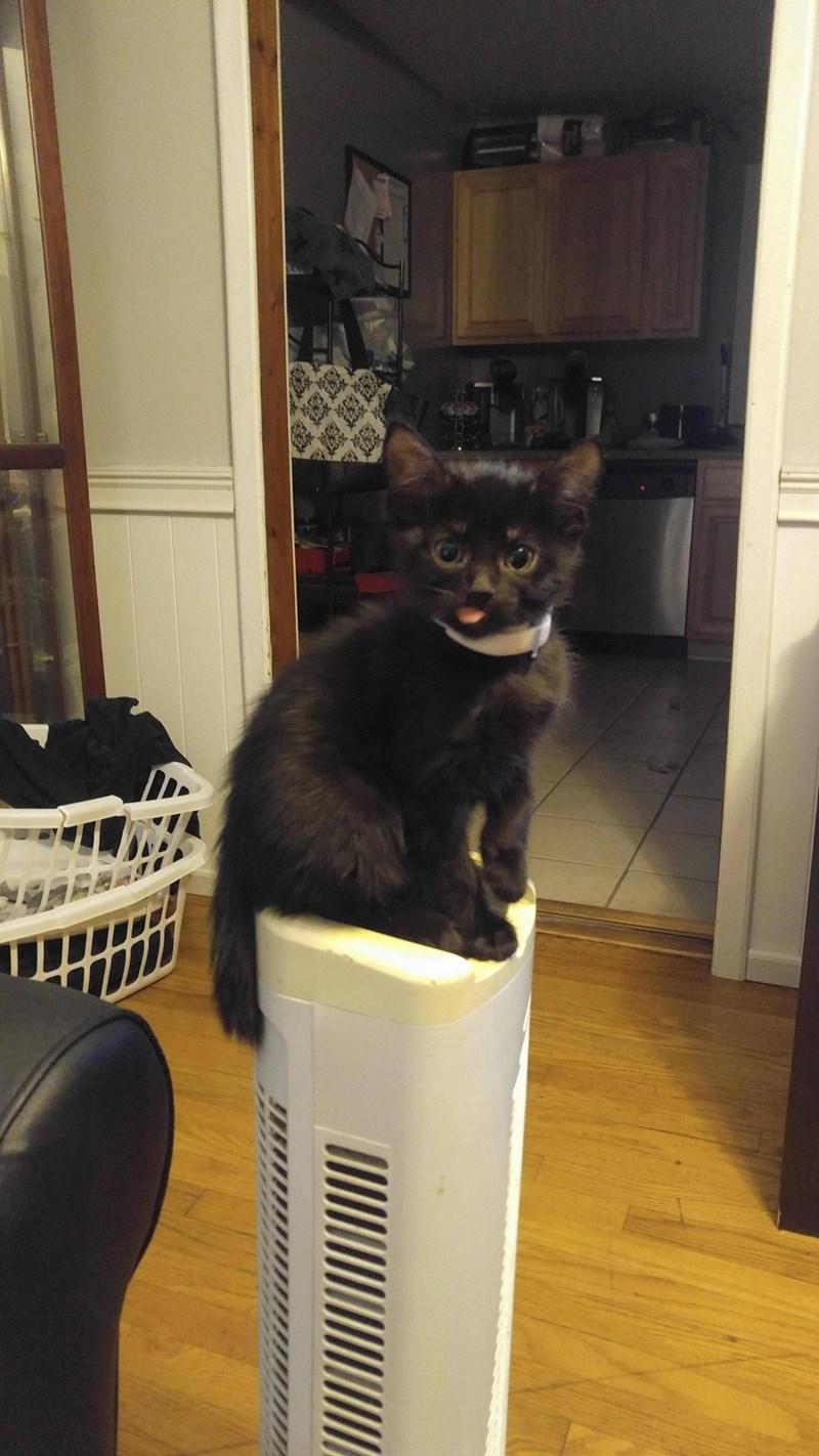 blep kitten sassy - 8976045312