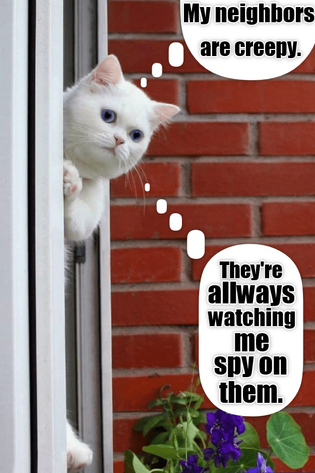 lolcats - Cat - My neighbors are creepy. They're allways watching me spy on them. IN