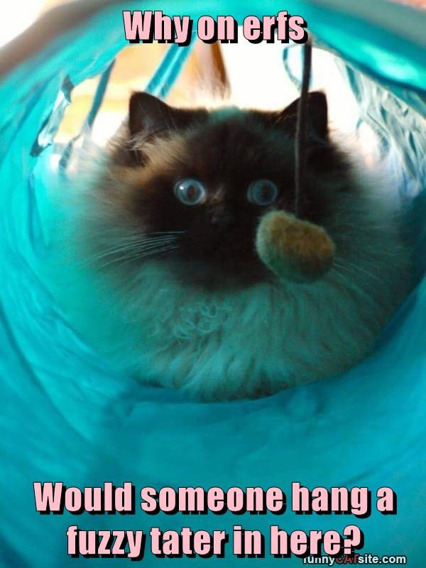 lolcats - Cat - Why on eris Would someone hang a fuzzy tater in here? TunnyAisite.com