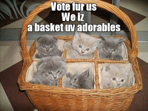 lolcats - Cat - Vote fur us We iz a basket uv adorables.
