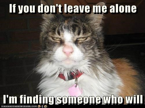 lolcats - Cat - If you don't leave me alone I'm finding someone who will ICANHASCHEIZBURGER.COM