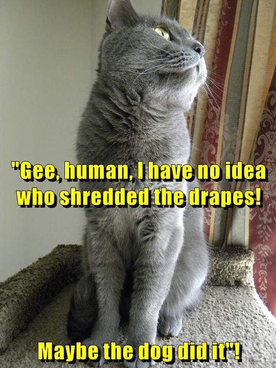 Funny cat meme of a cat that is blaming the dog for typical cat stuff such as shredding the curtains. Teach you cat to speak, and all you will hear are lies.