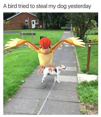 that-moment-when-a-pokemon-tries-to-steal-your-dog