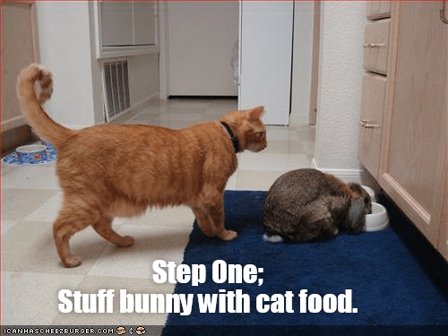 lolcats - Cat - Step One; Stuff bunny with cat food. ICANHASCHEEZEURGER.COM