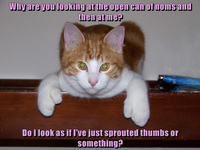 lolcats - Cat - Why are you looking atthe open can of noms and then atme? Do I look as if I've just sprouted thumbs or something?