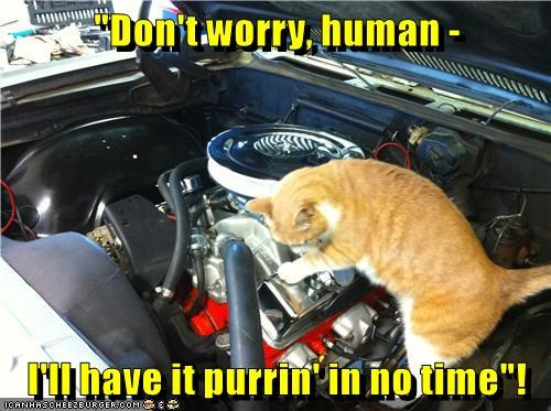 """Don't worry, human - I'll have it purrin' in no time""!"