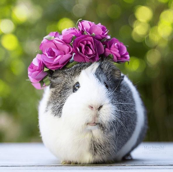 Rabbit - Marloeshi