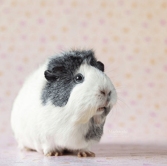 Mammal - Marioeshi