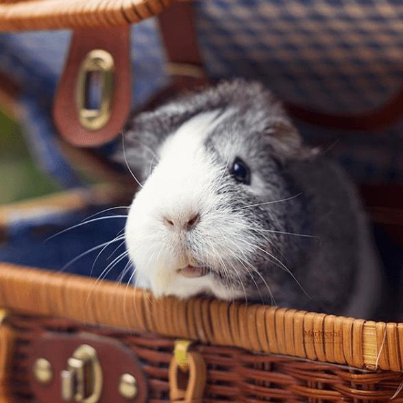 Rabbit - Marl eshi