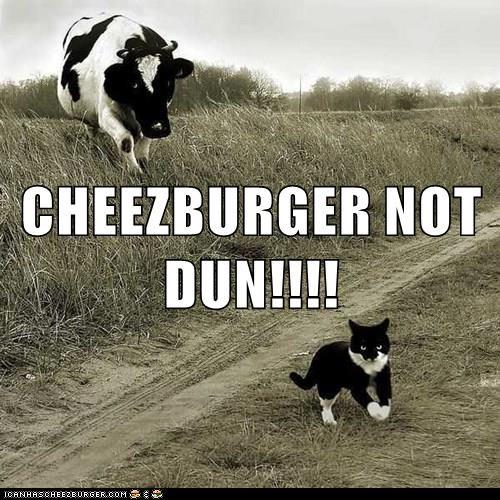 Cheezburger Image 8976737280
