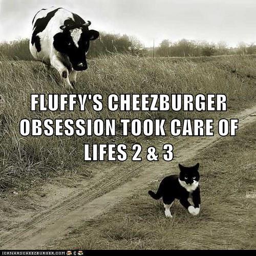 Cheezburger Image 8976737792