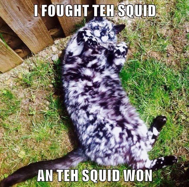 lolcats - Photo caption - I FOUGHT TEH SQUID AN TEH SQUID WON