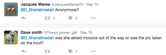 Text - Jacques Maree @JacquesMaree73 Sep 13 @D_Shariatmadari Anonymoos? t 2 Dave smith @Powys_power_gat Sep 13 @D_Shariatmadari was she asked mooove out of the way or was the pic taken on the hoof? 7