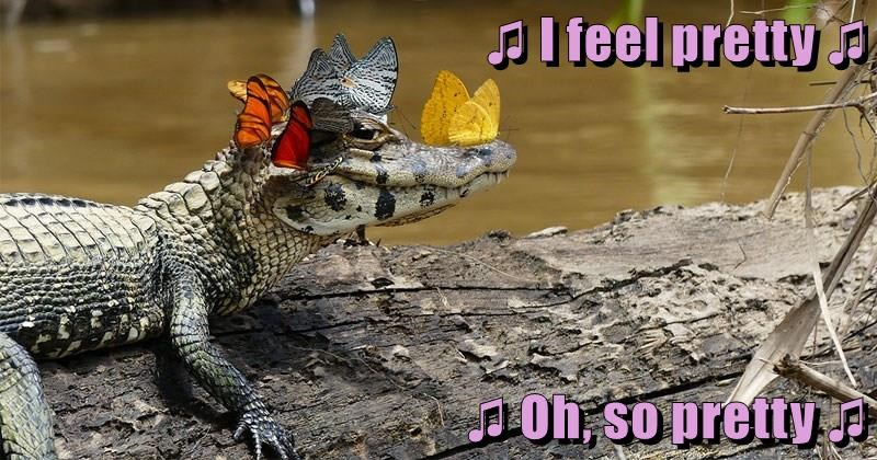 crocodile,alligator,butterfly,caption