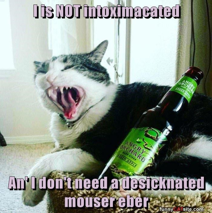 I is NOT intoximacated  An' I don't need a desicknated mouser eber