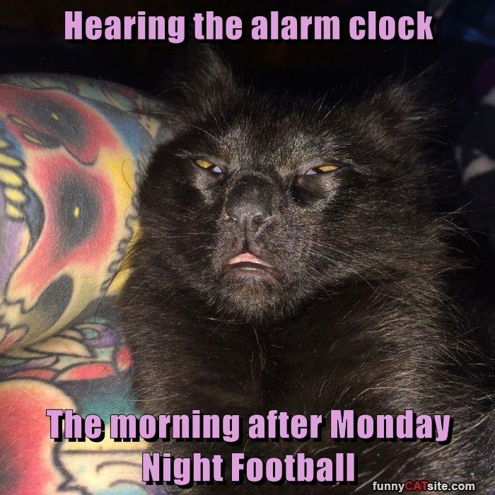 Hearing The Alarm Clock The Morning After Monday Night Football Lolcats Lol Cat Memes Funny Cats Funny Cat Pictures With Words On Them Funny Pictures Lol Cat Memes Lol Cats
