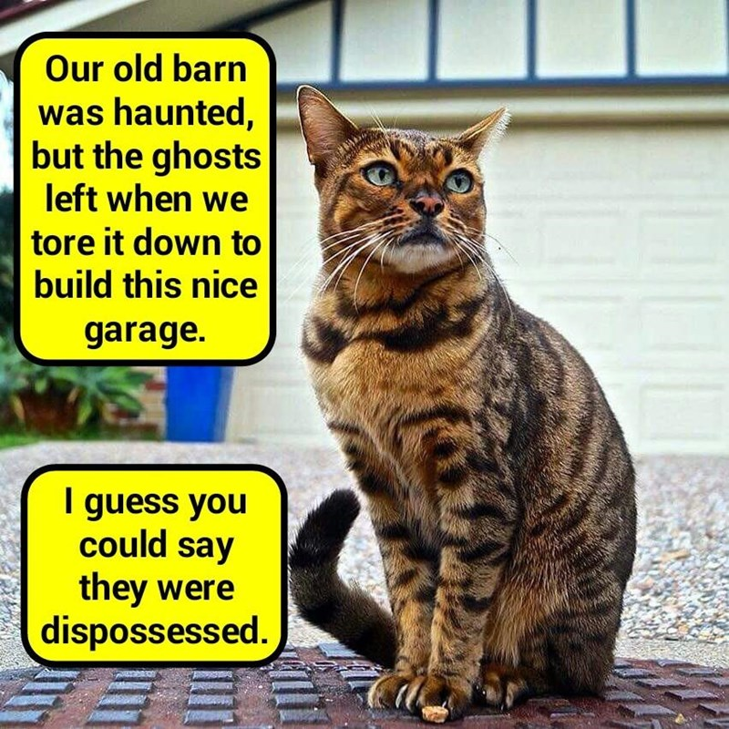 old cat dispossessed down ghosts tore caption haunted barn - 8976950784