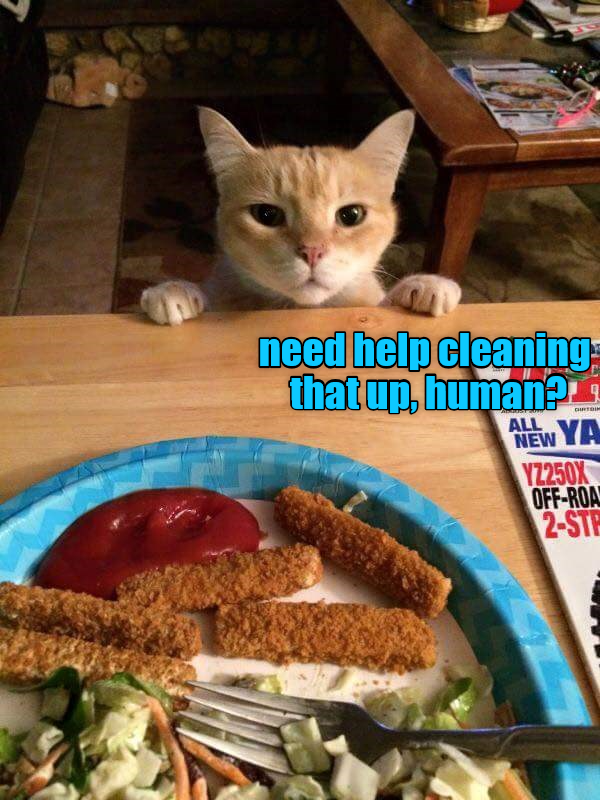 cat cleaning help caption need - 8976962048